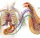 Metabolic-Syndrome-Cannabidiol-CBD