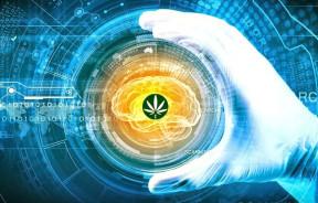 brain-marijuana1280