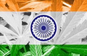 India Flag on cannabis background. Drug policy. Legalization of marijuana