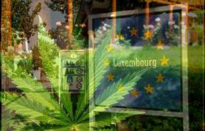 Luxemburg, legalizacja, marihuany rekreacyjnej, legalne konopie w unii, luksemburg legalizuje