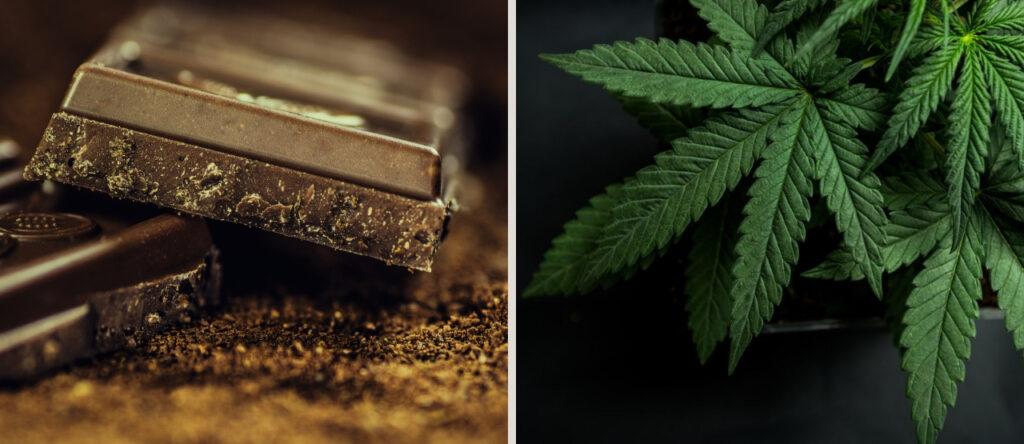 czekolada z marihuaną