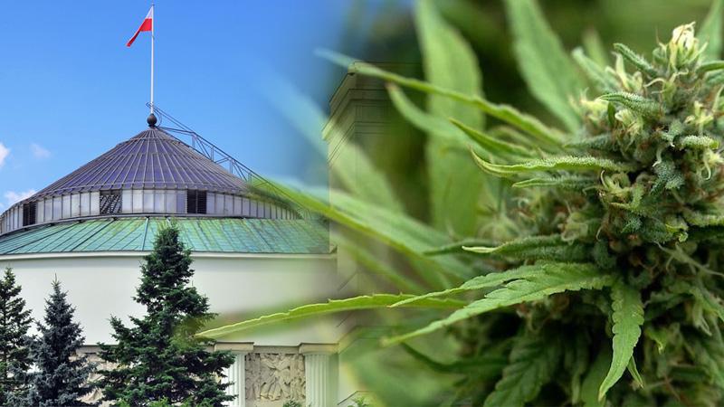 prezydium zespołu ds legalizacji marihuany